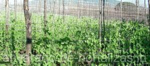 HORTOMALLAS, envarado de hortalizas, vainas, malla espaldera, malla para entutorar, envarado, entutorado, rafia, malla tutora, hortalizas, cultivo de pimientos, cultivo de tomates